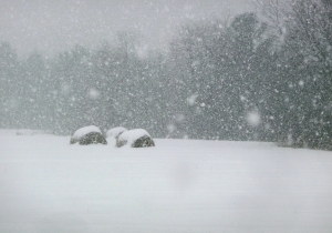 picture of snow storm, round bails of hay in field of snow