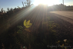 Picture of sun beams on leaf