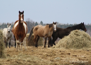 photo of horses in field