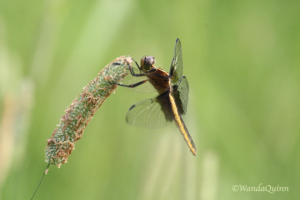 image of dragonfly
