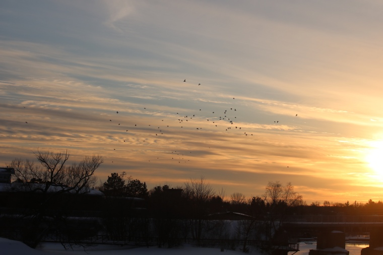 Photo of sunset and flock of birds