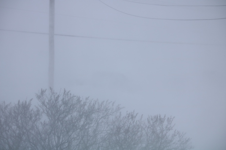 Photo of whiteout conditions