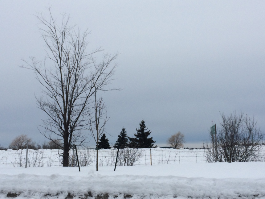 Landscape photo of bluish sky, white snow and trees.