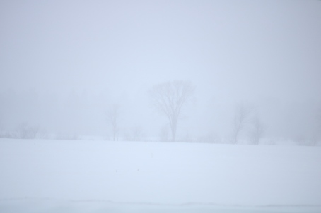 photo of whiteout conditions, just barely visible, trees in the distance