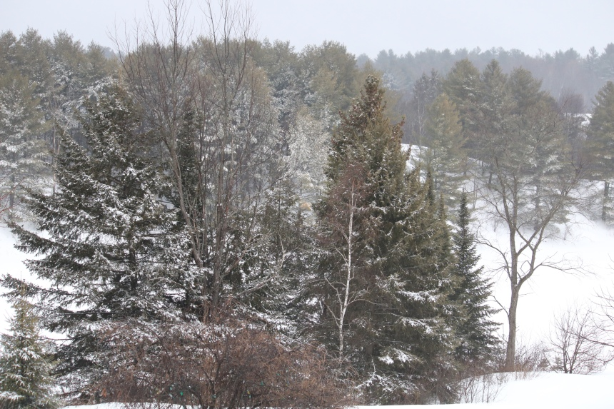Photo of winter country scene
