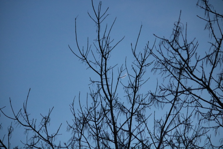 Photo of branches against the blue sky