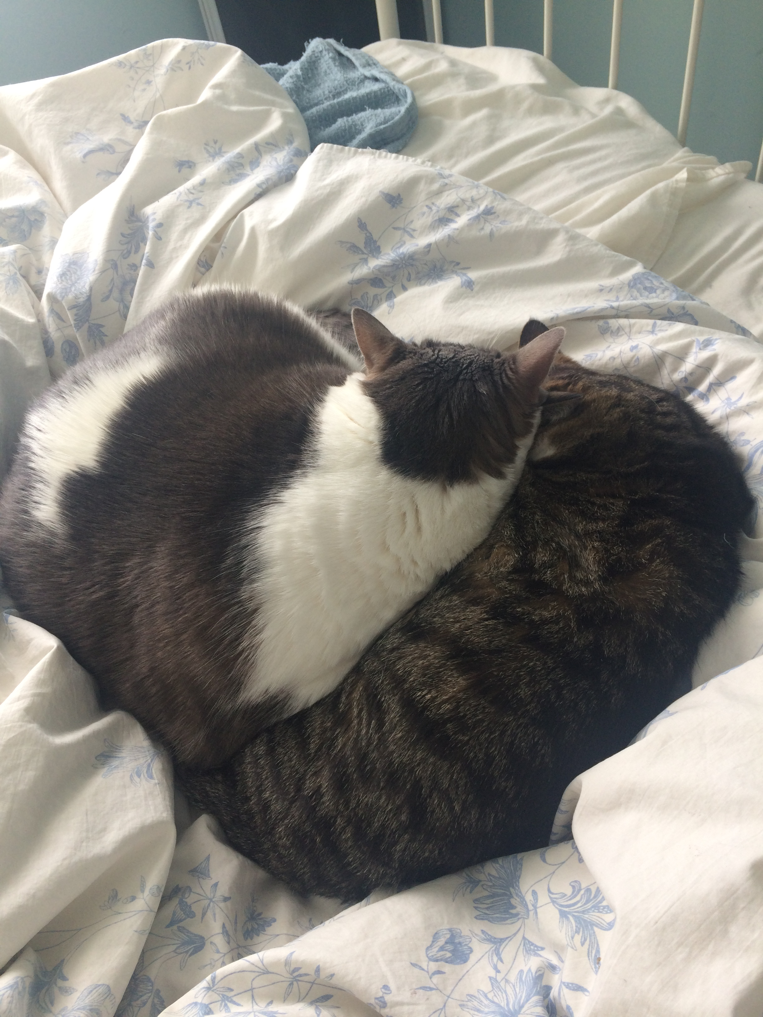 two cats cuddling on a bed makes a heart shape
