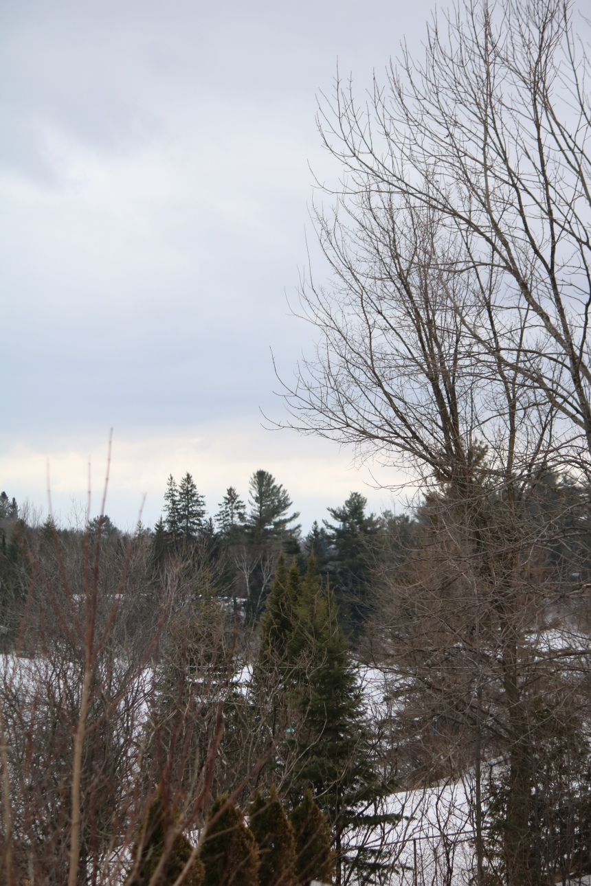 Landscape photo of sky and tees in winter