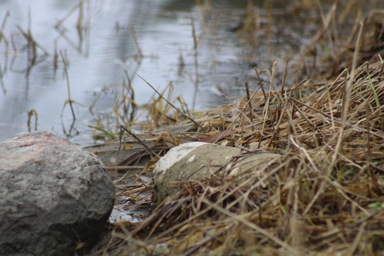 River shore rocks, water and weeds