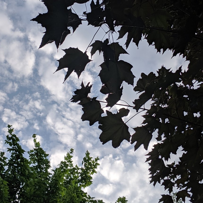 Sky and tree leaves