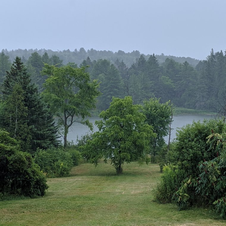Landscape backyard lawn trees and river in rain