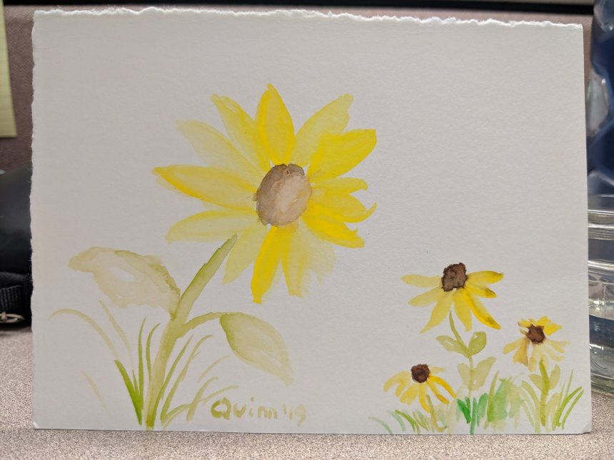 Watercolour painting sunflower and black eyed susans