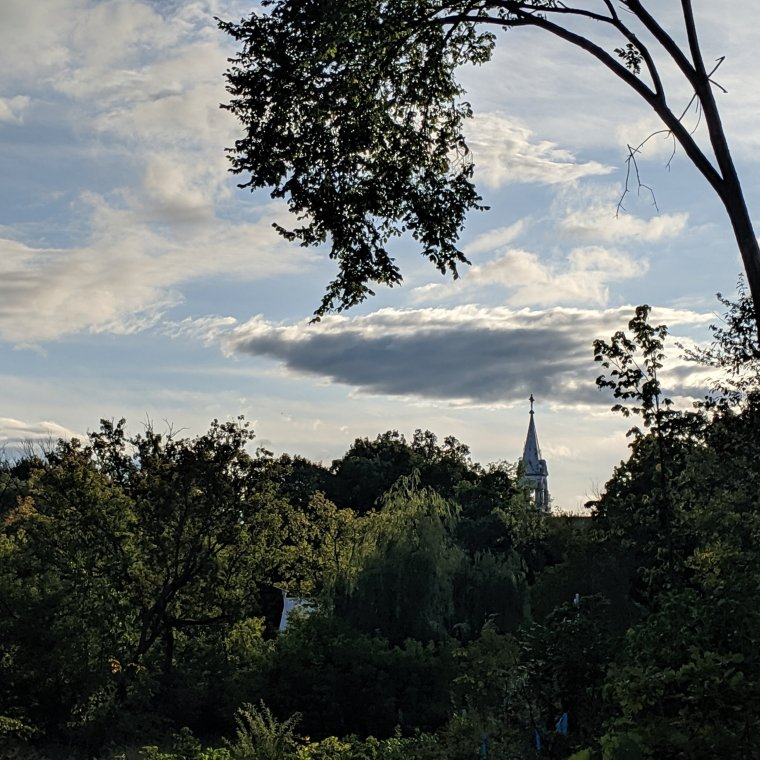 Church steeple in the distance framed by tree leaves