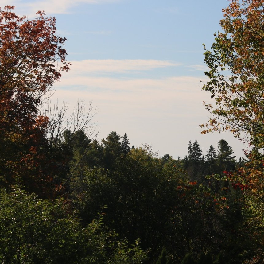 Trees with coloured leaves against bright blue sky and white clouds