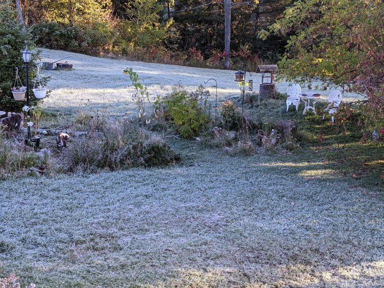 Frost coats the grass and flowers