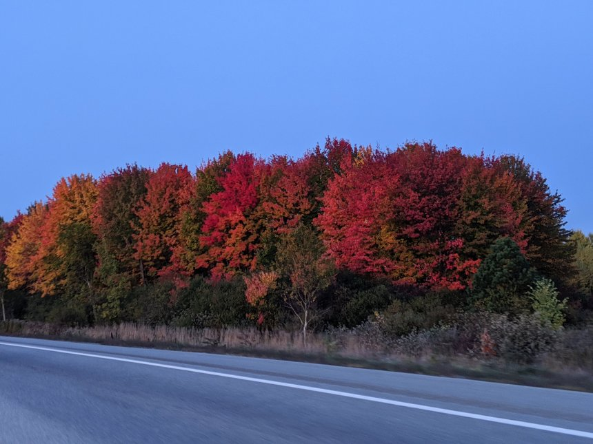 Red, orange and yellow trees on side of road