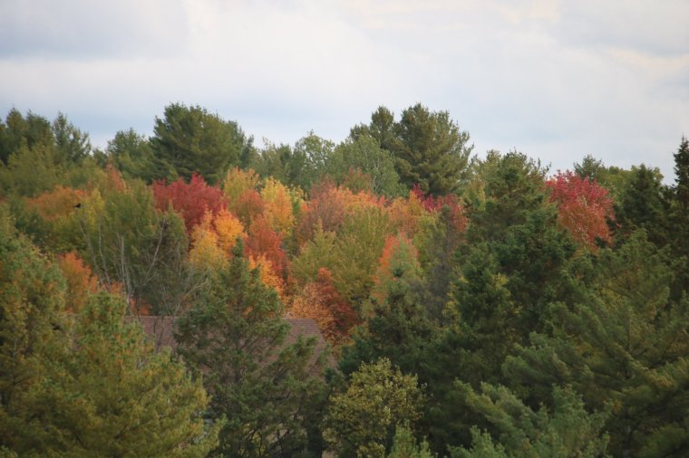 Coloured leaves on trees in a bush