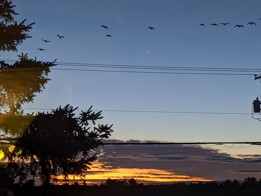 Sunset with geese flying