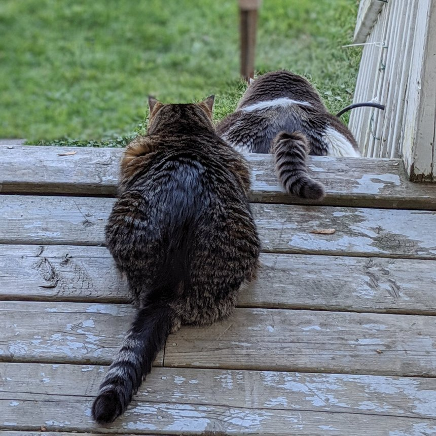Two cats intently focused on something