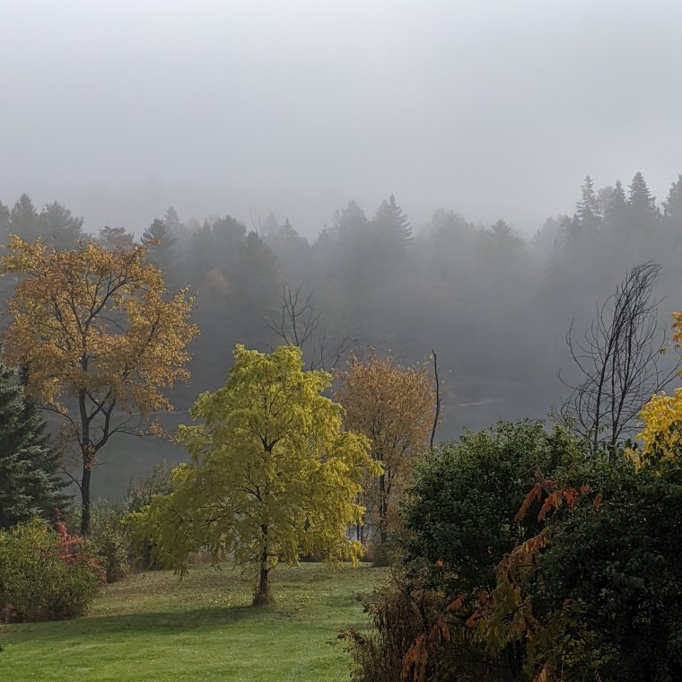Fall foliage in fog