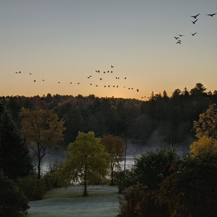 Geese flying from river at sunrise
