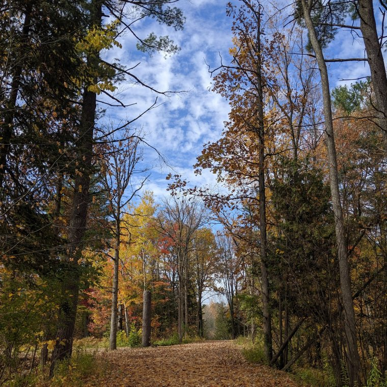 Nature trail, fall colours, leaves on ground, blue sky