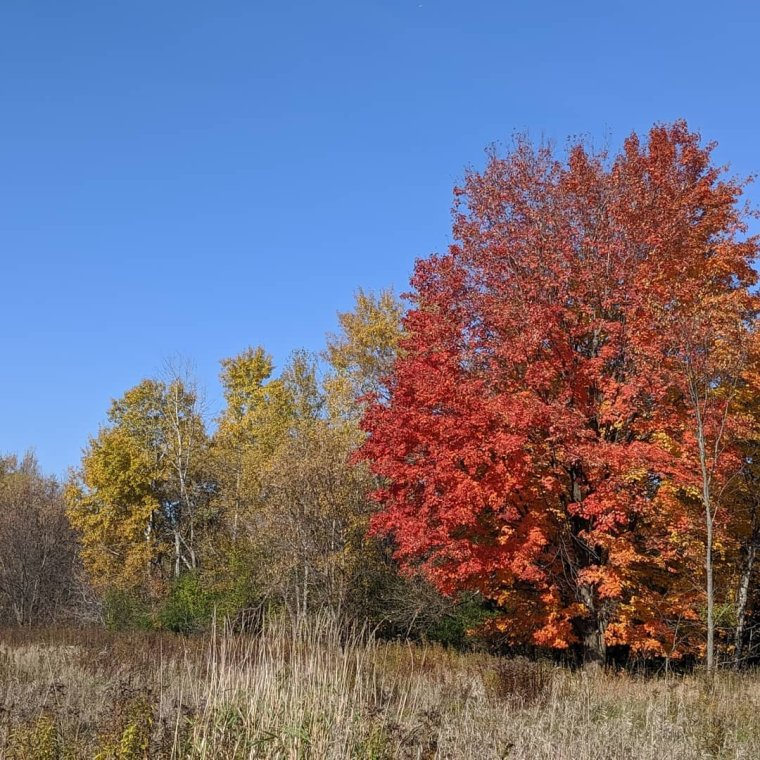 Trees in full Fall colors