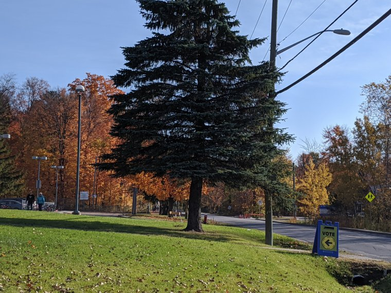 Trees in full colour and a sign directing voting location