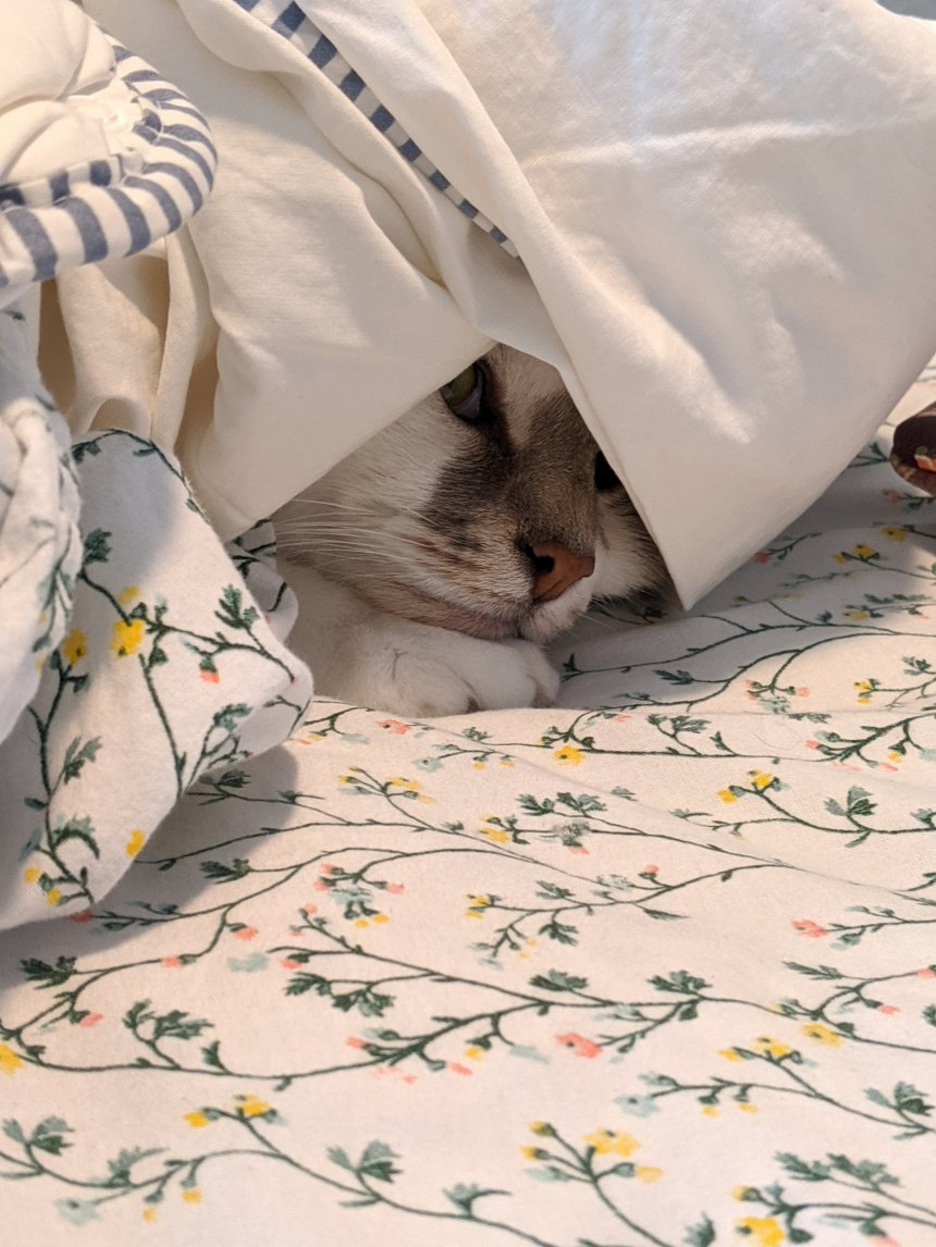 White cat with grey spots on face is hiding under covers. Only his nose, right eye and paw are visible as the blanket drapes over his head.