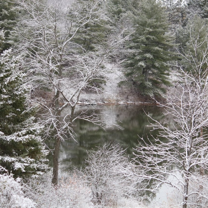 Evergreen trees covered in snow, framing the river
