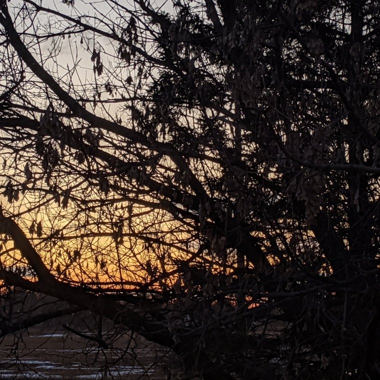 Sunset through silhouetted bare tree branches