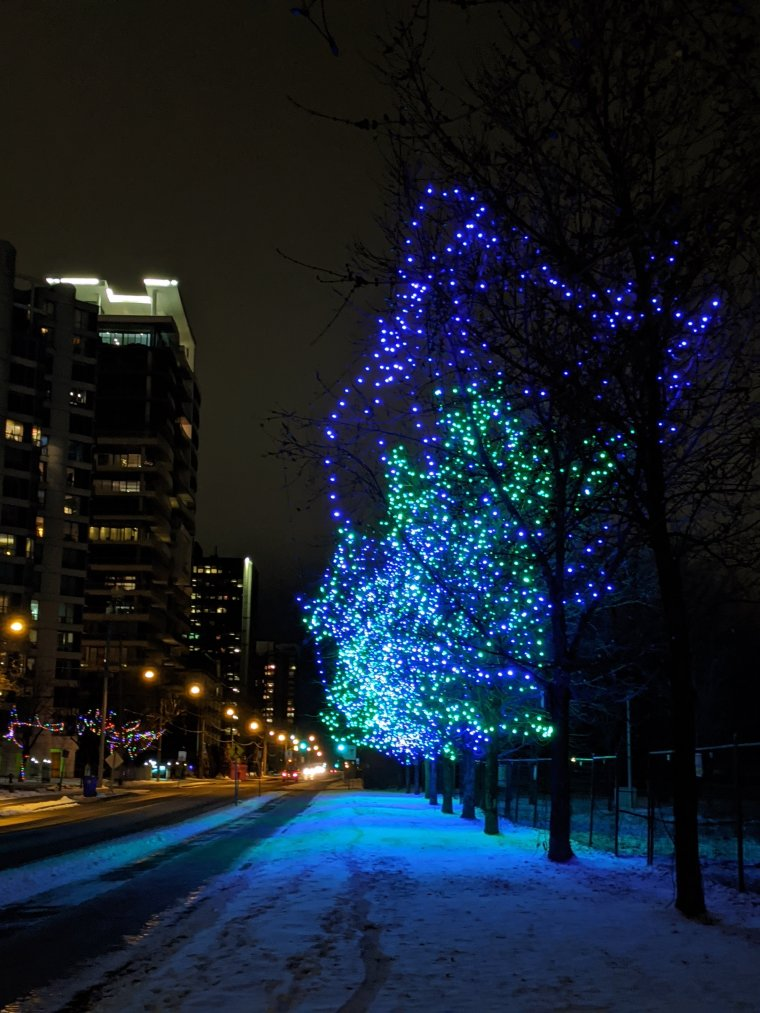 Blue and Green lights decorate three trees along the road