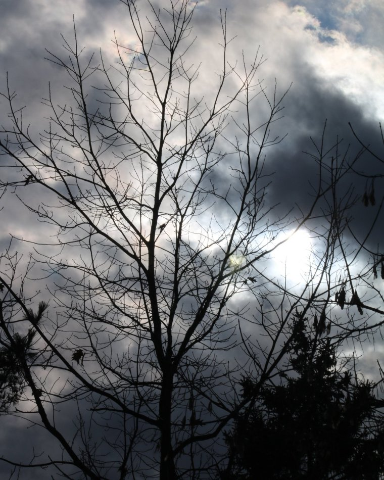 Sun breaking through clouds, trees silhouetted