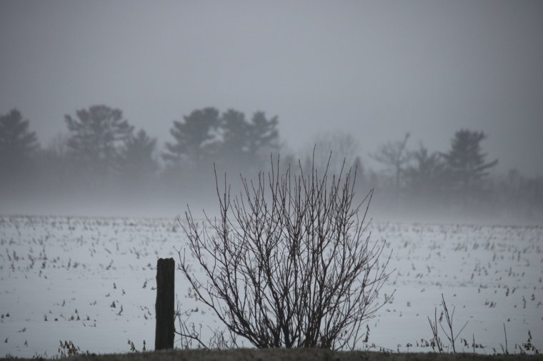 Mysterious dark foggy field and trees