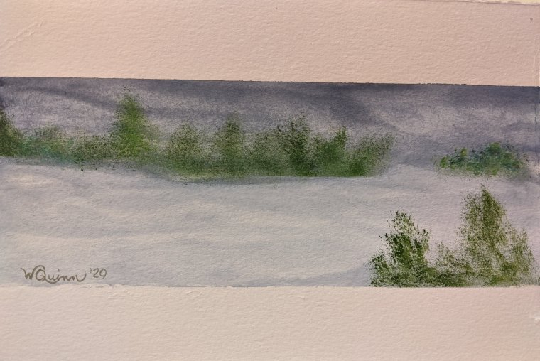 Blue Grey sky reflected in snow with green trees in the background and a small bush in foreground