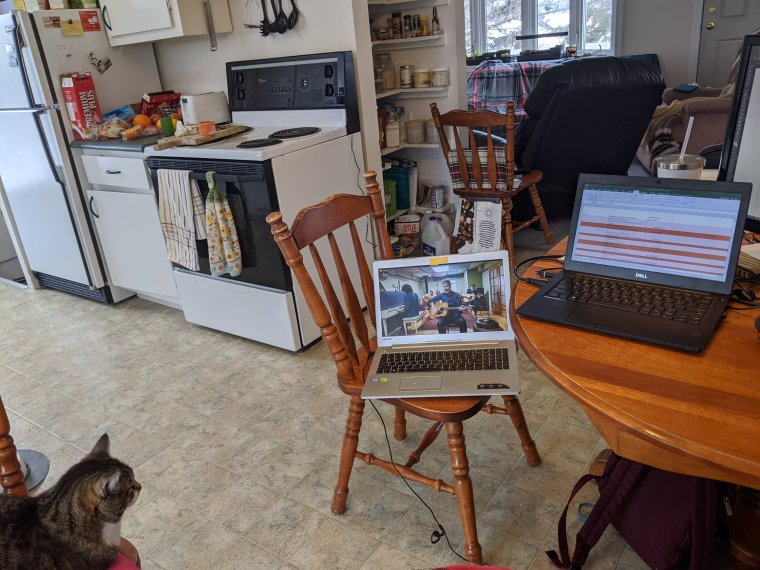 Cat resting on a wooden kitchen chair watching musicians performing on a laptop, resting on a wooden kitchen chair with another laptop on a wooden kitchen table with a spreadsheet open, in a kitchen.