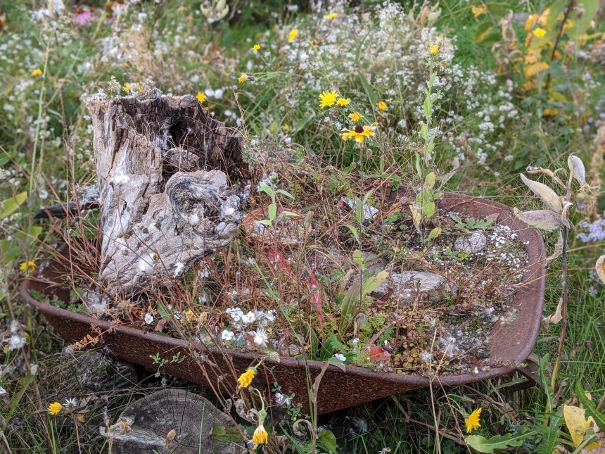 wheelbarrow with old tree stump and wild flowers