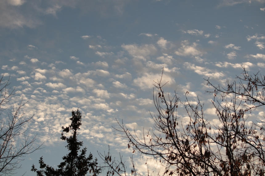 white cotton-candy type clouds dot the blue sky with tree tops poking into the photo.