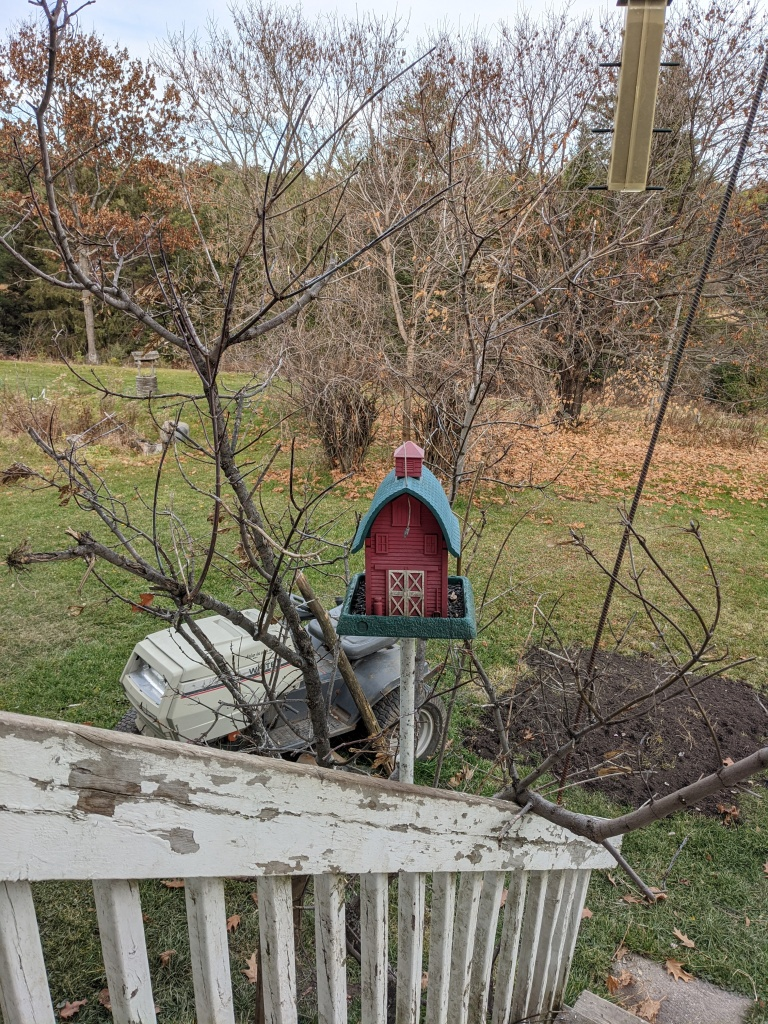 tree limb surrounds a barn bird feeder