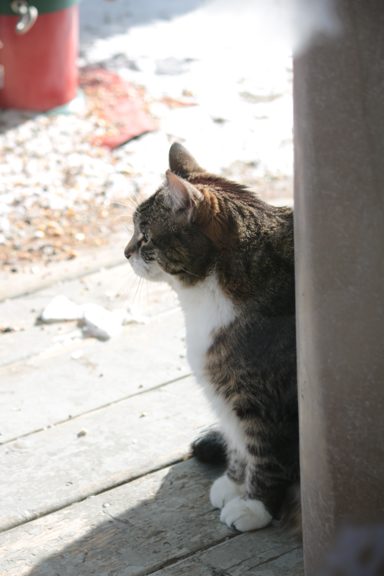 A tabby cat sits in a sunny spot on a wooden veranda