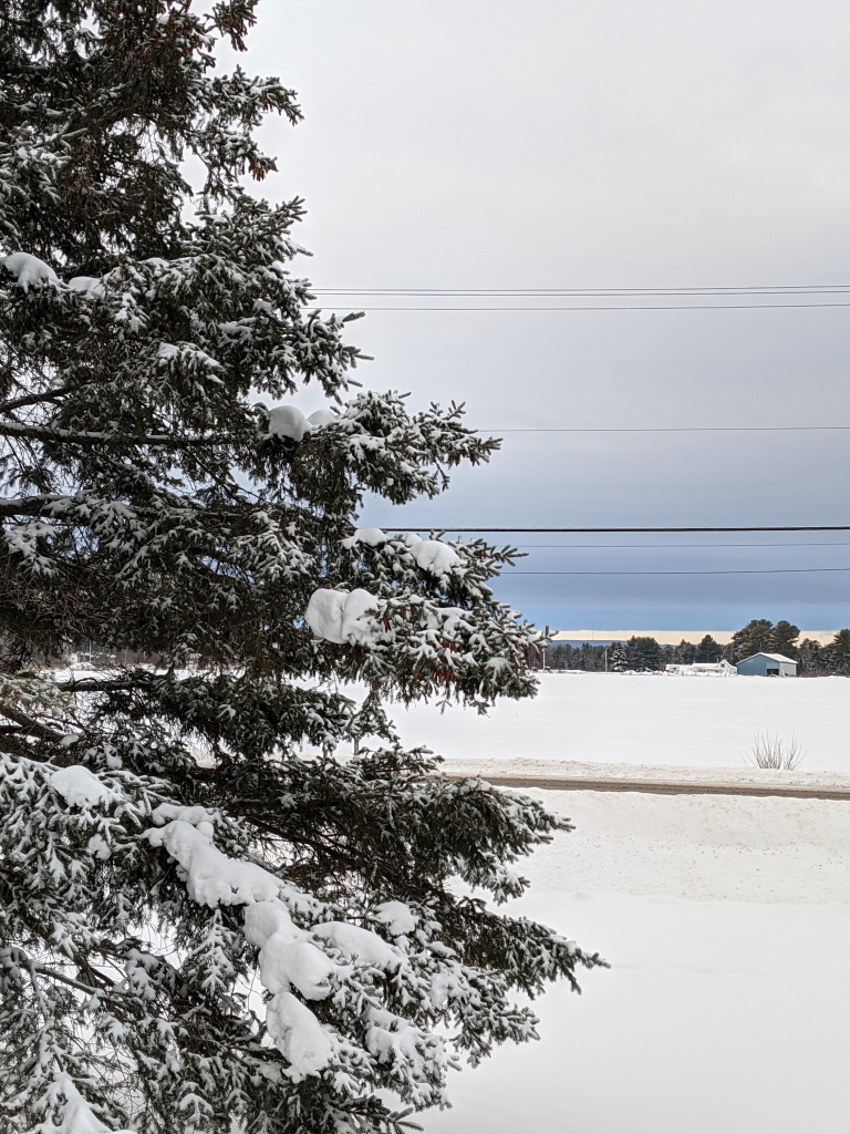 Winter scene of a large spruce tree in the foreground covered with snow, a barn and field in the distance with cloud cover and blue sky